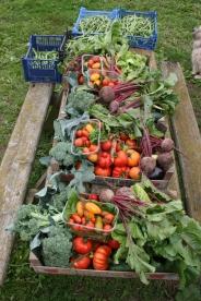 Harvest box 3-8-17 2